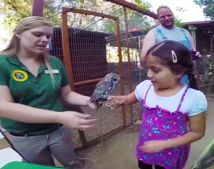 rescued-blind-owl-zeus-10