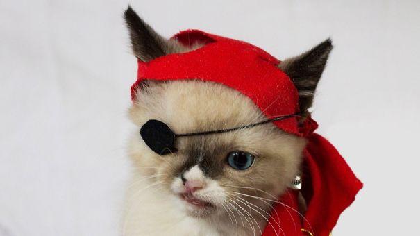 Sir Stuffington. Rescued Kitten, Dog-attack Survivor.