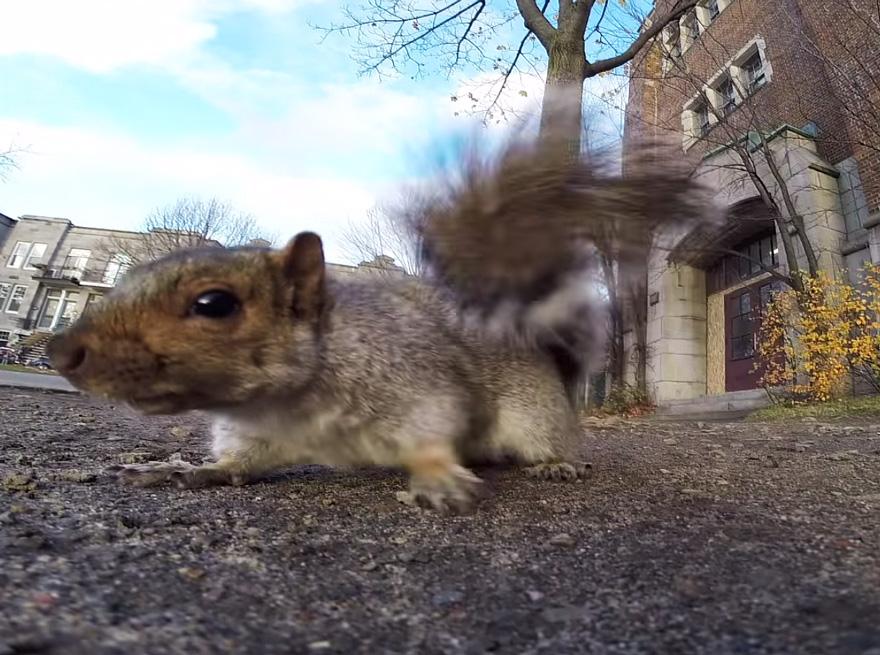 squirrel-takes-gopro-3