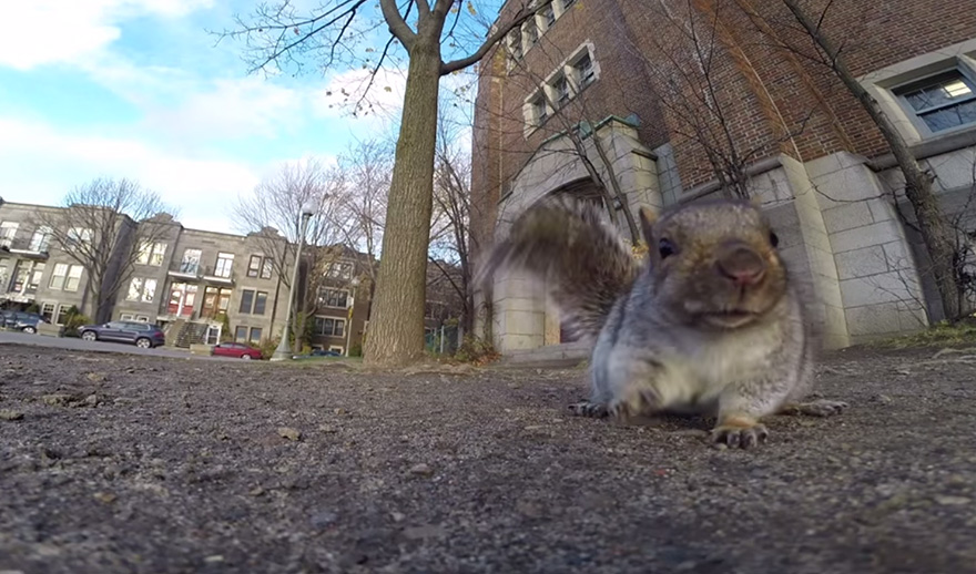 squirrel-takes-gopro-6