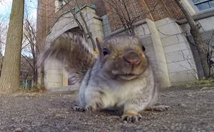 Squirrel Steals Man's GoPro To Film Its Life In The Trees