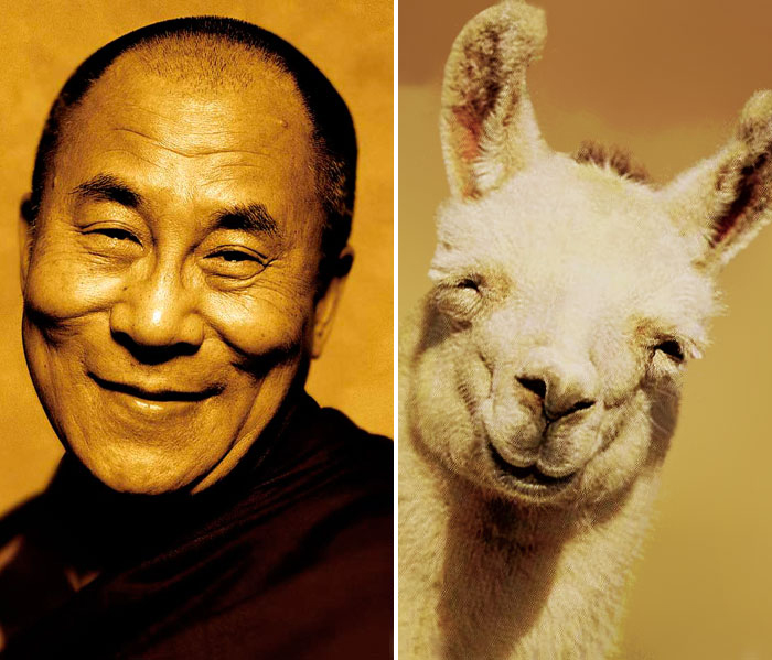 Happy Dalai Lama Looks Like Happy Llama