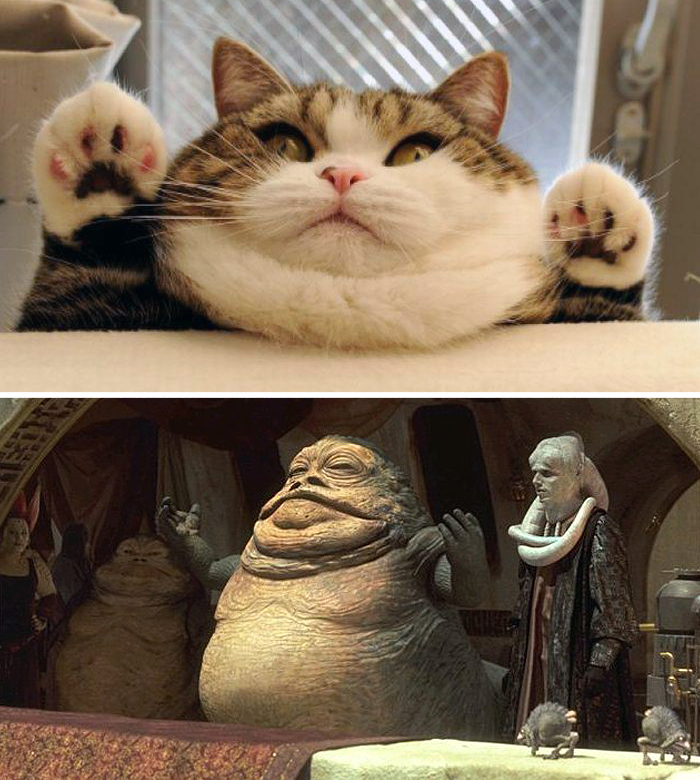 This Cat Looks Like Jabba The Hut