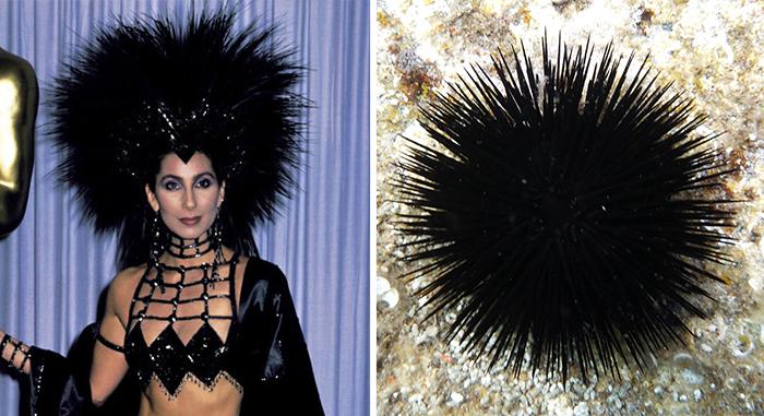 Cher's Hat Looks Like A Sea Urchin