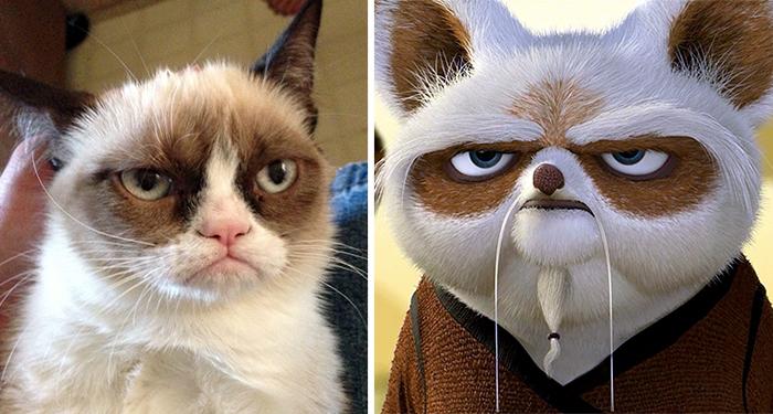 Grumpy Cat Looks Like Master Shifu