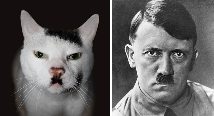 This Cat Looks Like Hitler