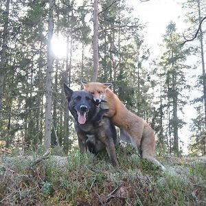 Tinni The Dog And Sniffer The Wild Fox