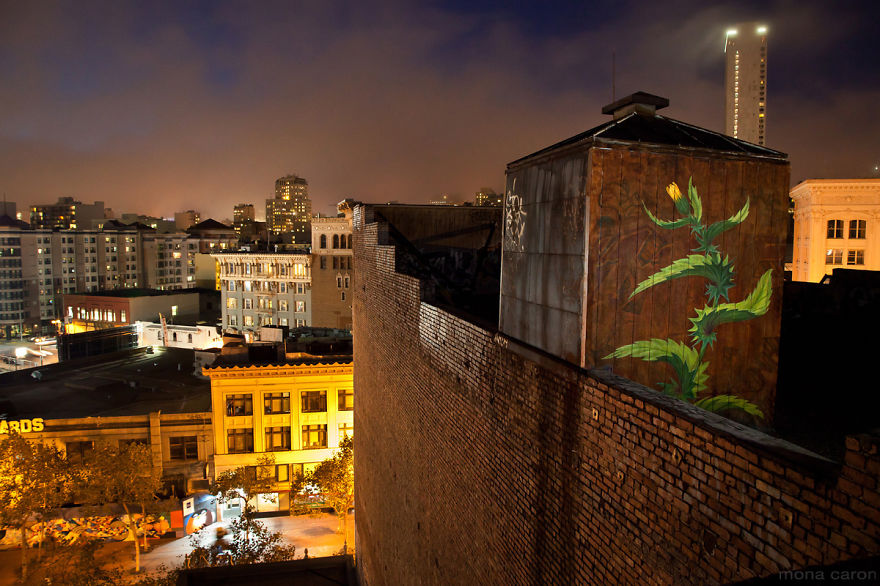 I Paint Weed Murals That Slowly Take Over The City (Gifs+Video)