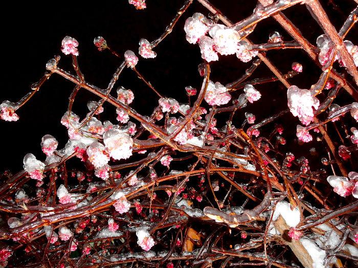 Icerain In Spring