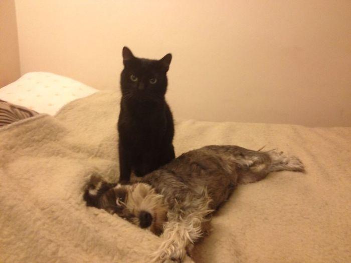 Ziuta The Dog And Franek The Cat :)