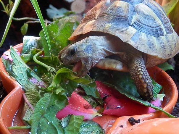 Tonks Enjoying Lunch