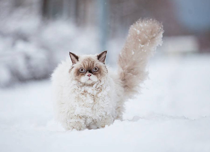 This Persian Cat Discovers Snow For The First Time