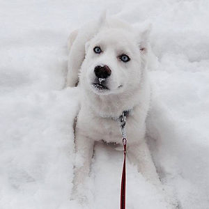 Kiora's First Snow Day