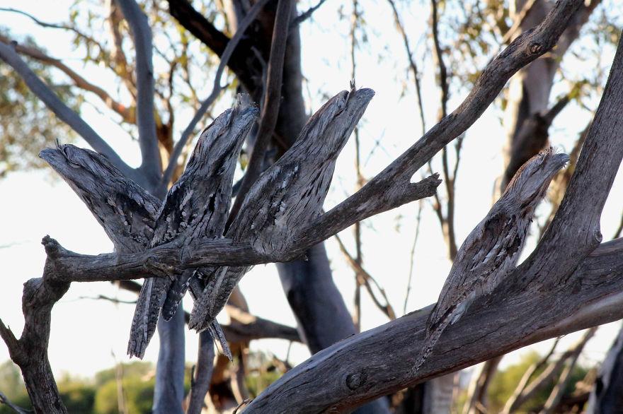 I'm A Dead Tree Branch