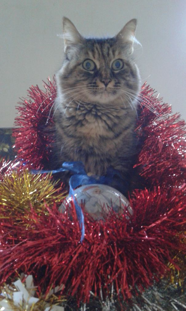 Wendsday Thinks She Is The Xmas Tree