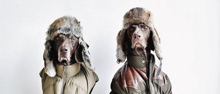 21 Animals With More Wearing Style You