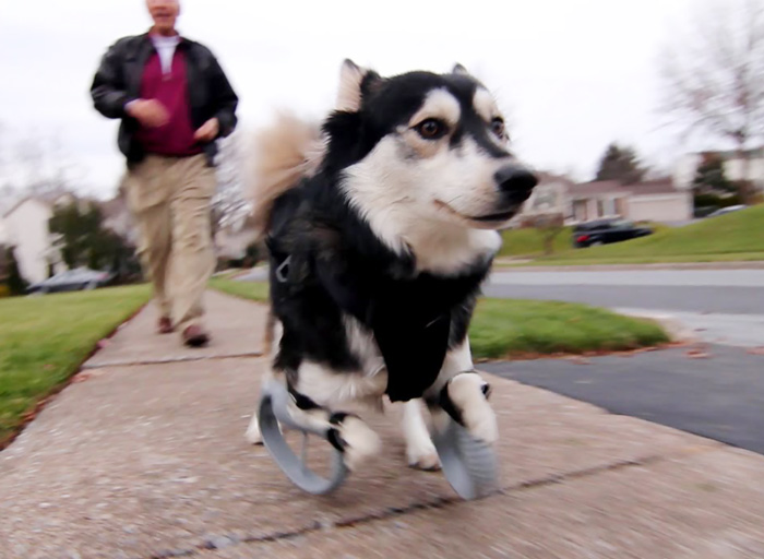 Dog With Deformed Paws Gets 3D-Printed Prosthetic Legs That Let Him Run