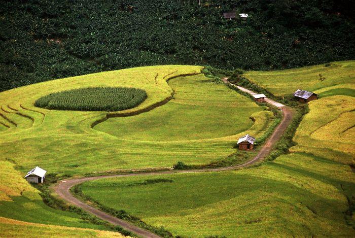 Rice Field In Bat Xat, Lao Cai, Vietnam