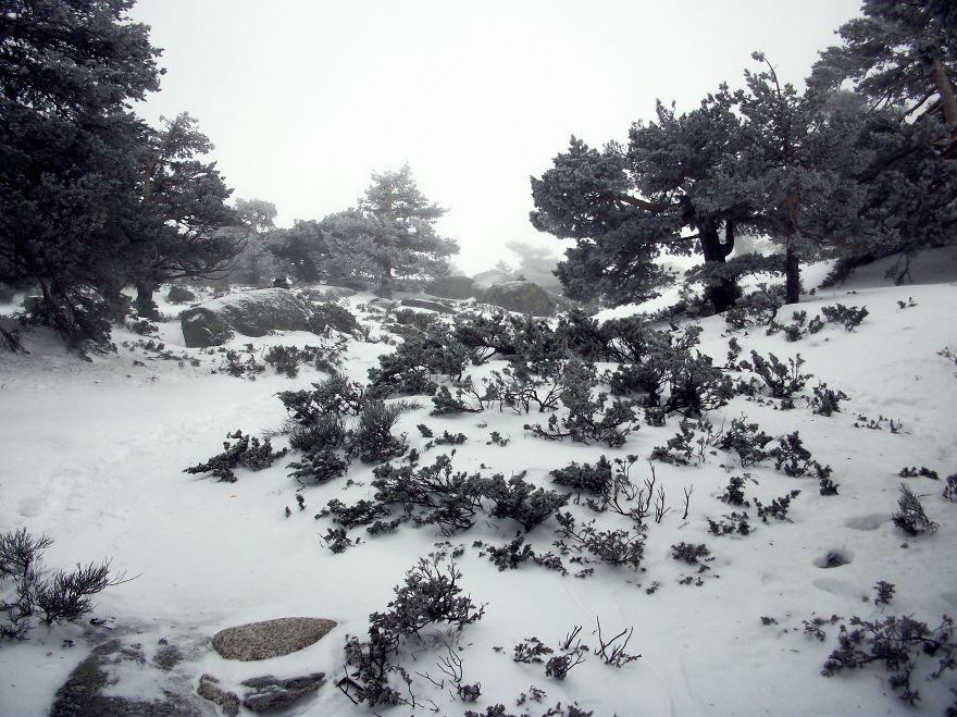Camino Schmidt In Navacerrada, Spain