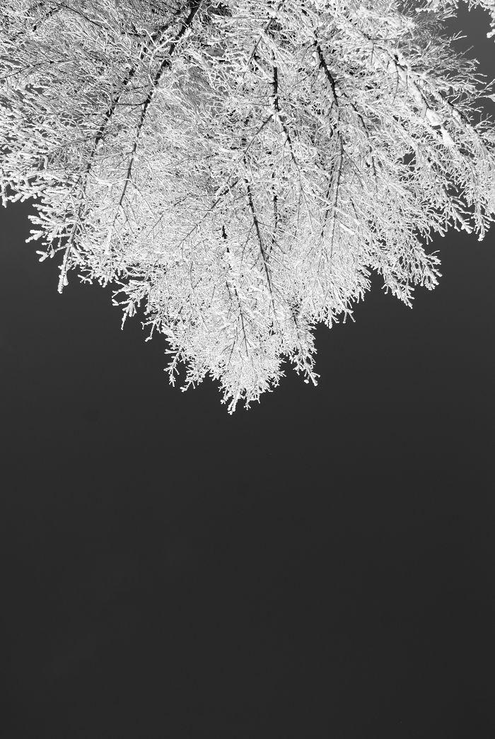 Pine Fractal