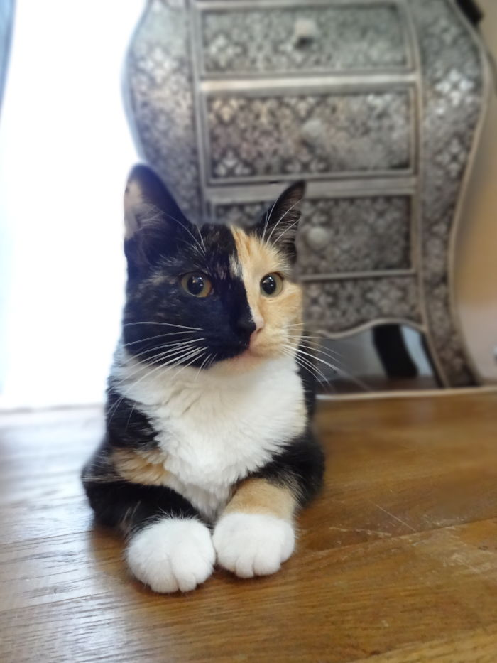 Sasha - Double Face Cat