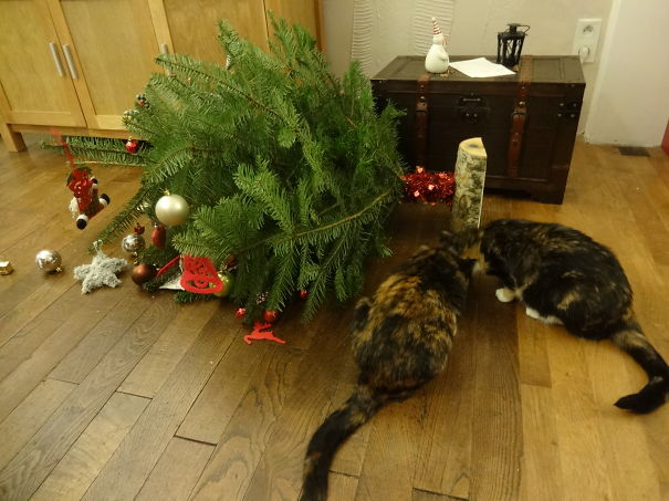 Oh! Christmas Tree, Are You Ok?