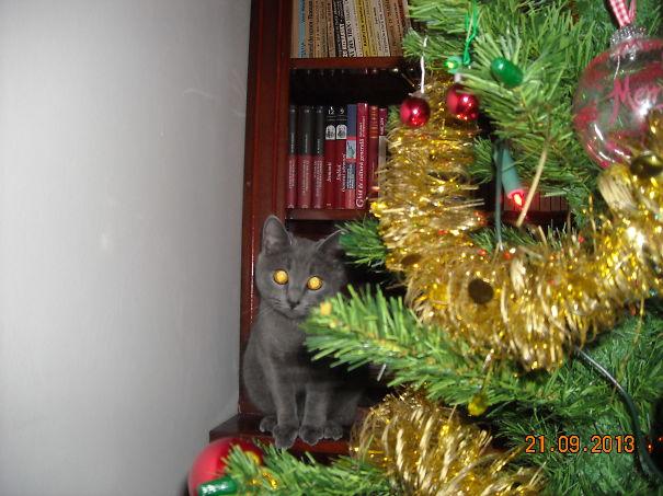 Christmas Lights:on
