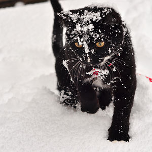 Tank's First Blizzard :)