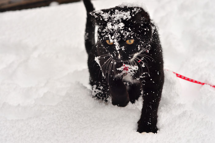 Tank's First Blizzard