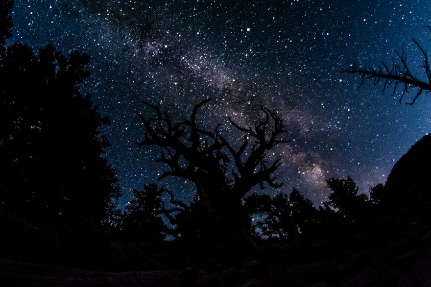 Ancient Trees And The Milky Way In Great Basin National Park, Nevada.