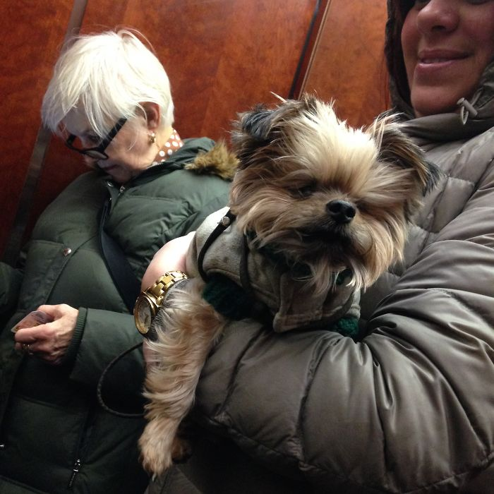 Dog Migrating From His Apartment To The Lobby In An Elevator, Photo (c) 2014 John Marshall Mantel