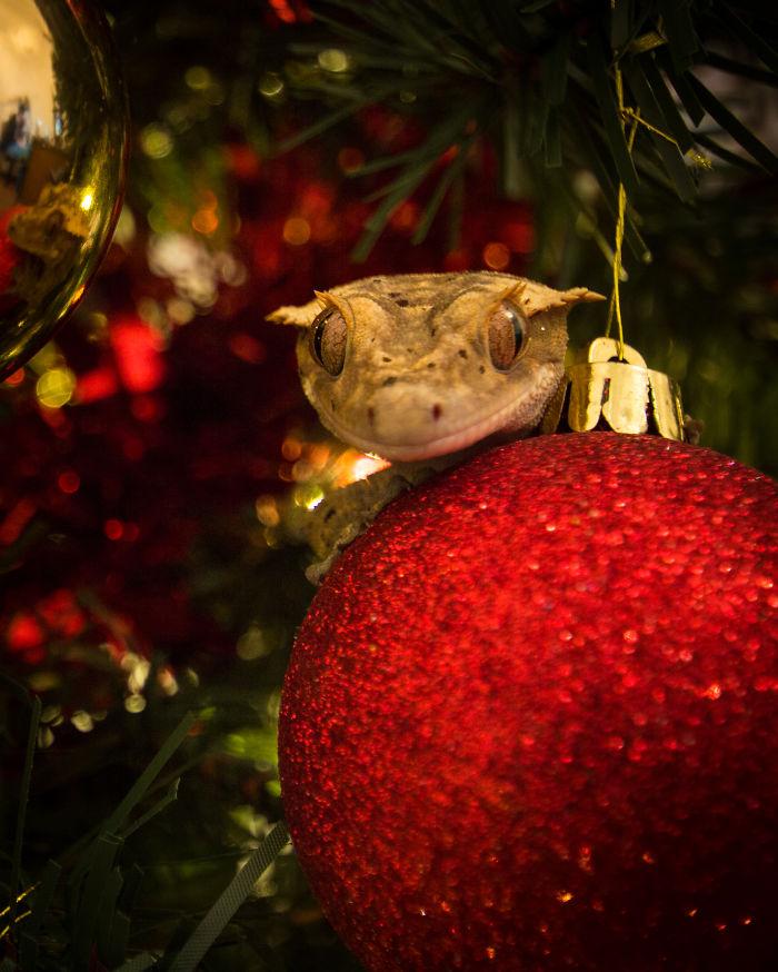 Zazu Can't Wait For Christmas!
