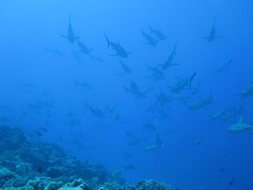 Shark Wall In Fakarava