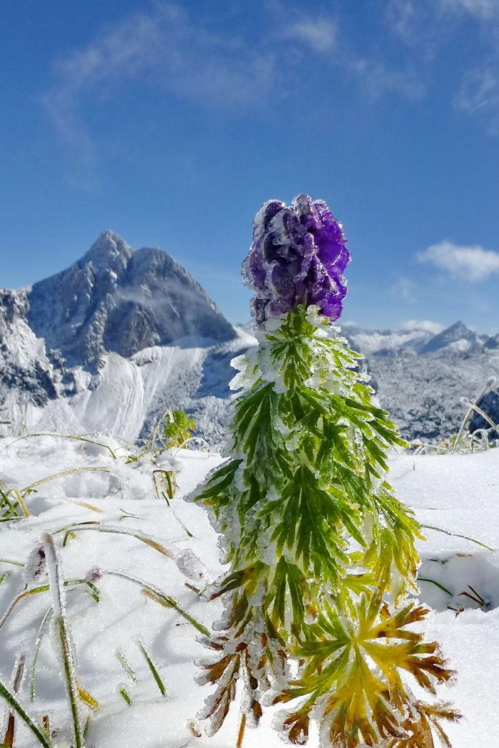 Rainbow Ice Flower