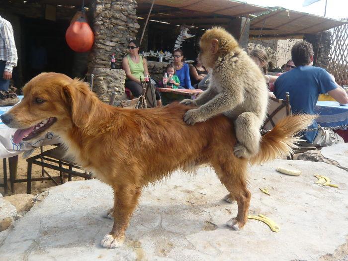 A Monkey And A Dog