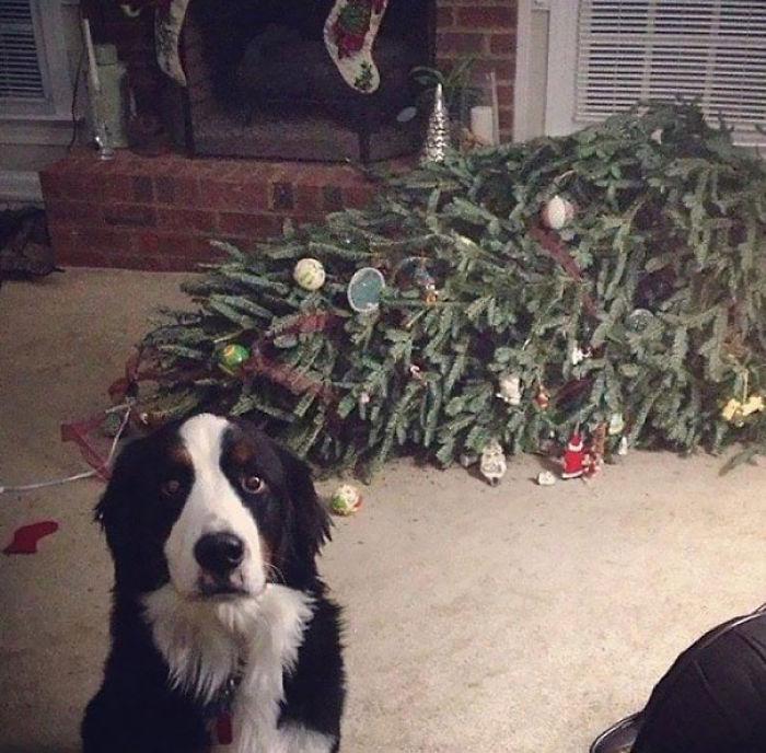 Oh gut, du bist hier! Der Baum ist grade ohnmächtig geworden!
