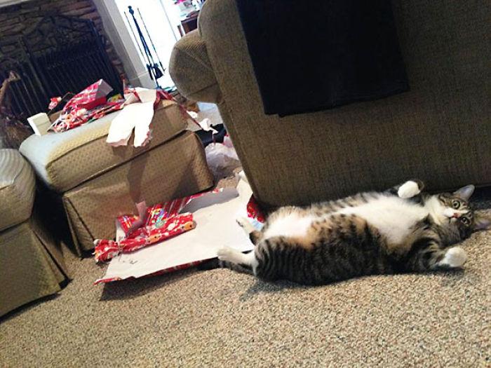 Meie Katze hat am Weihnachts Morgen alle Geschenke aufgerissen