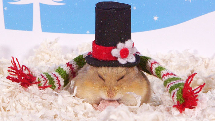Cute Hamsters: 12 Days Of Christmas (Pics And Videos)