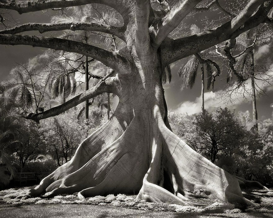 In tribute to the Oak Ancient-trees-beth-moon-10