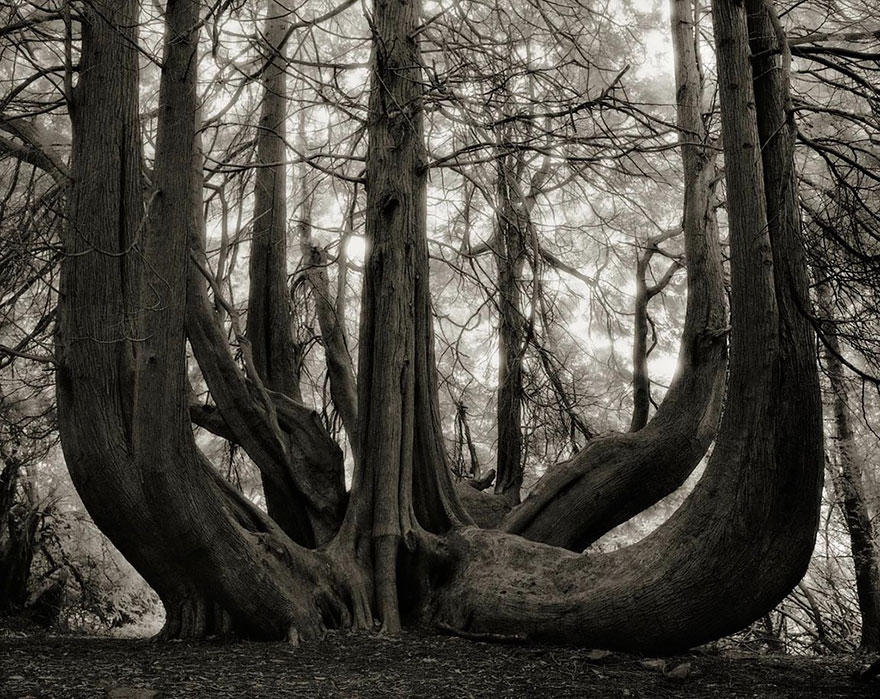 In tribute to the Oak Ancient-trees-beth-moon-14