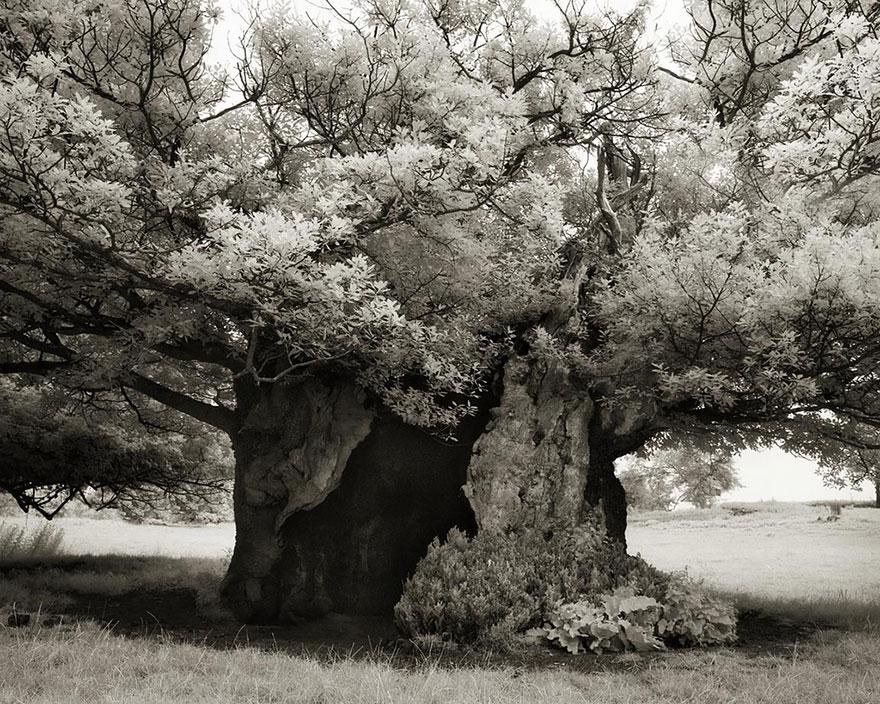 ancient-trees-beth-moon-19