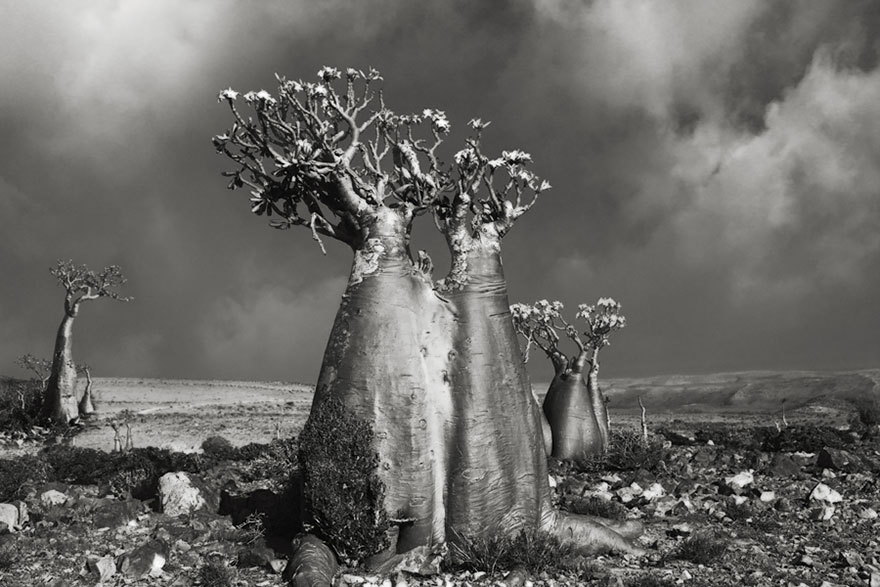 ancient-trees-beth-moon-5