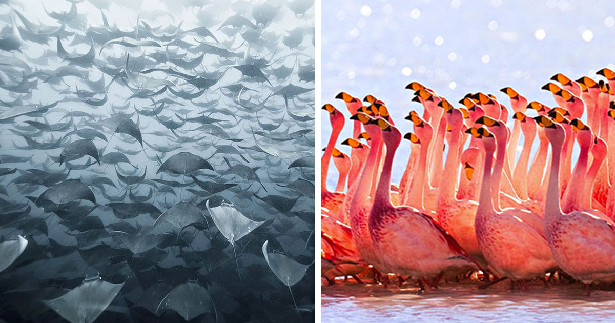20+ Breathtaking Photos Of Animal Migration