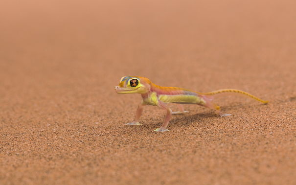 Little Colorful Lizard