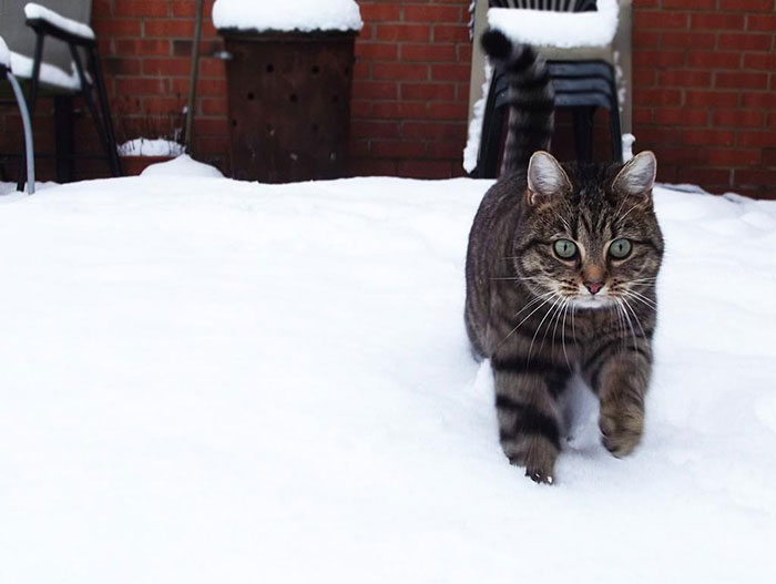 Cat's First Winter Out In The Snow