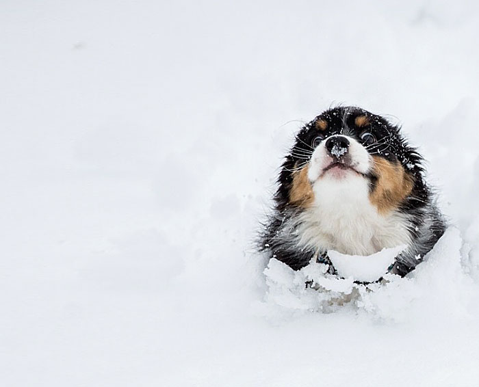 Puppy Running Through The Snow