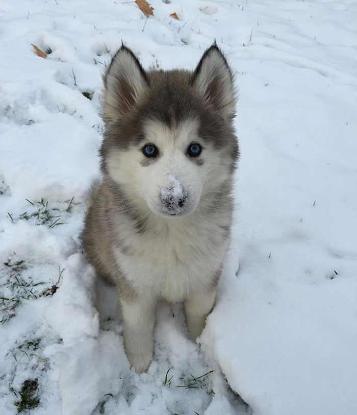 This Is His First Snow