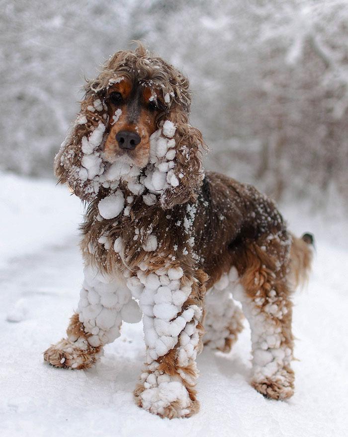ver la reacción de estos animales ante la nieve