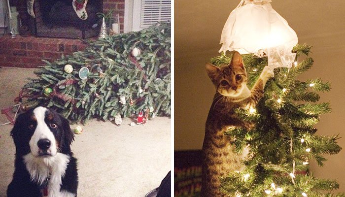 50 Dogs And Cats That Destroyed Christmas