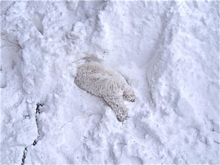 Flossie Plays In Snow For The First Time